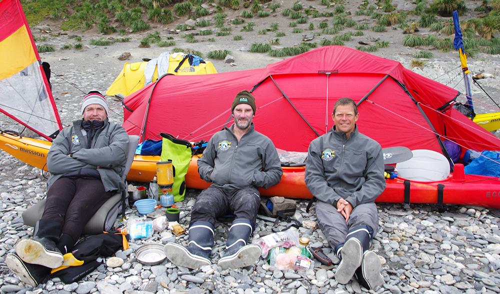 King penguins South Georgia island