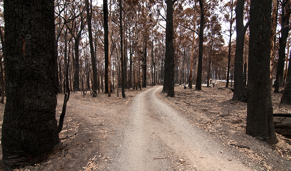 "black saturday essay On february 7, 2009, black saturday, 173 people died  is found in an essay  entitled ""thoughts on the victorian bushfires"", in february 2009,."