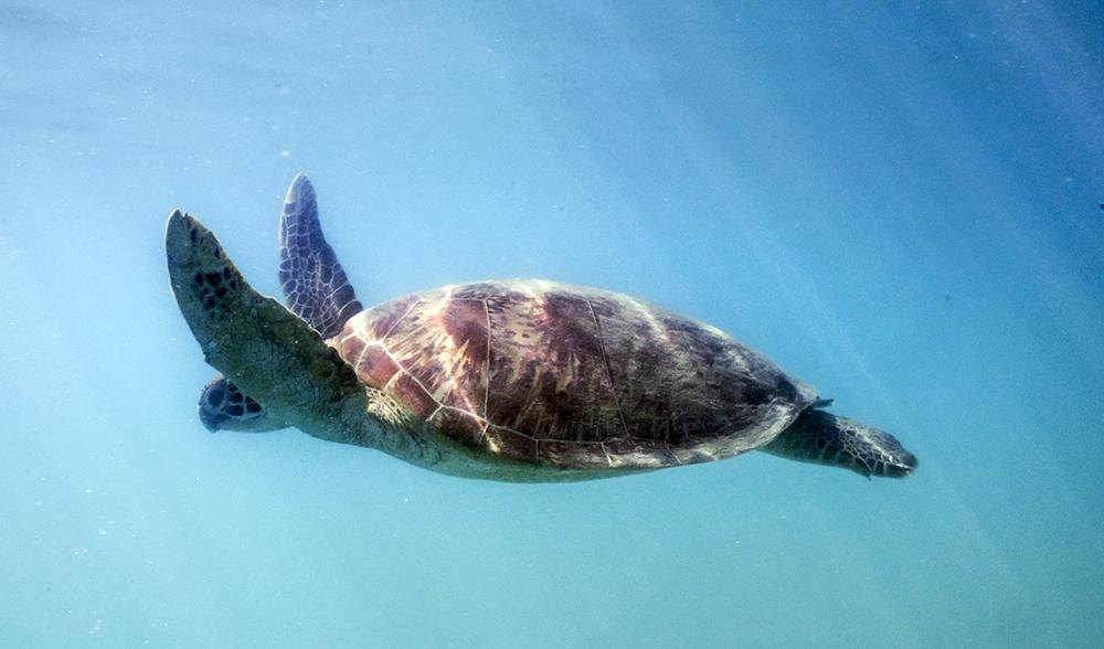 Whitsundays Queensland paddle adventure