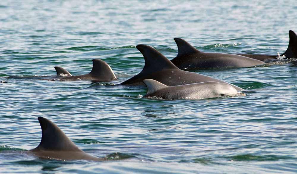 Bottlenose dolphins Bunbury WA