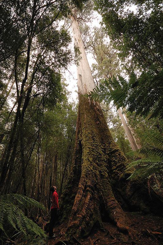 mt field tasmania