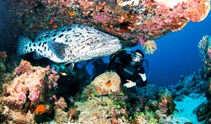Cod hole, Great Barrier Reef