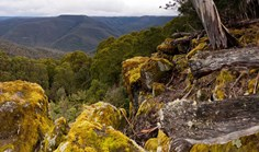 Barrington Tops National Park, New South Wales