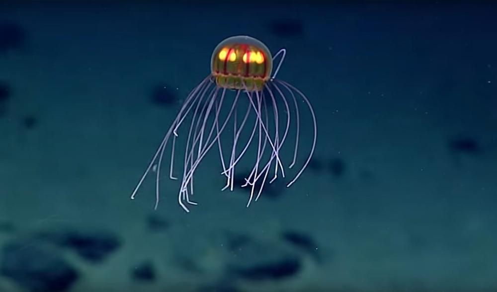 VIDEO Surreal Deep Sea Jellyfish Near Mariana Trench