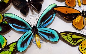Butterflies science