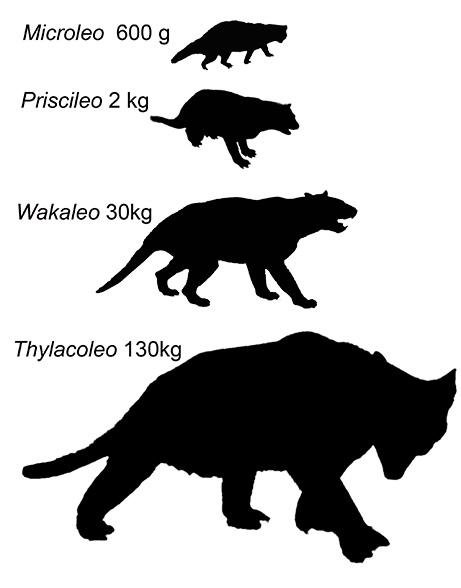 marsupial lion silhouettes UNSW