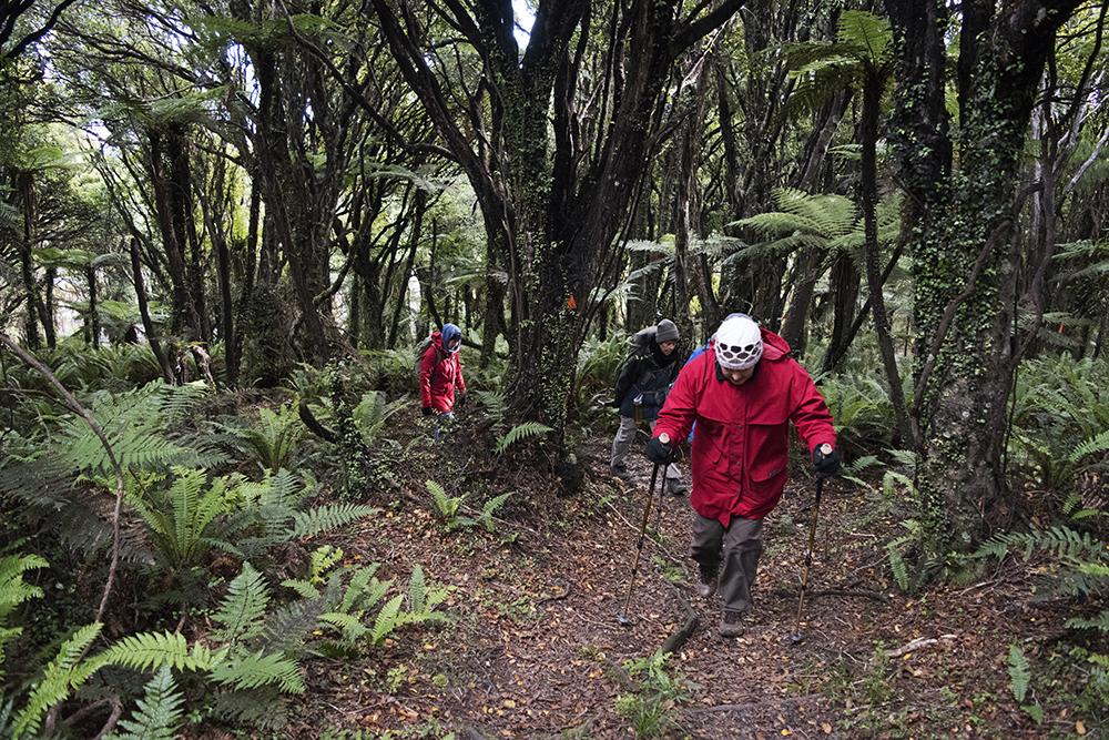 Hollyford Track hiking new zealand