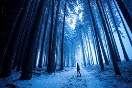 Sugar Pine Walk in Laurel Hill, NSW provided William with the perfect location to capture shades of blue within the snow covered forest