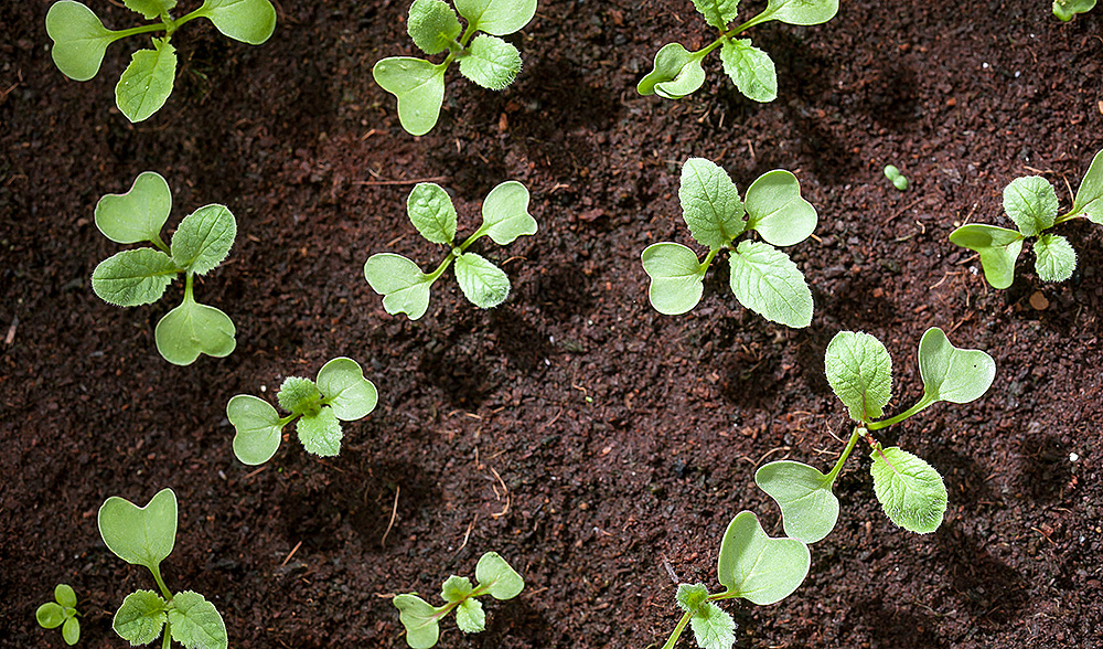 What you need to know about soil to keep your garden for Topsoil adelaide