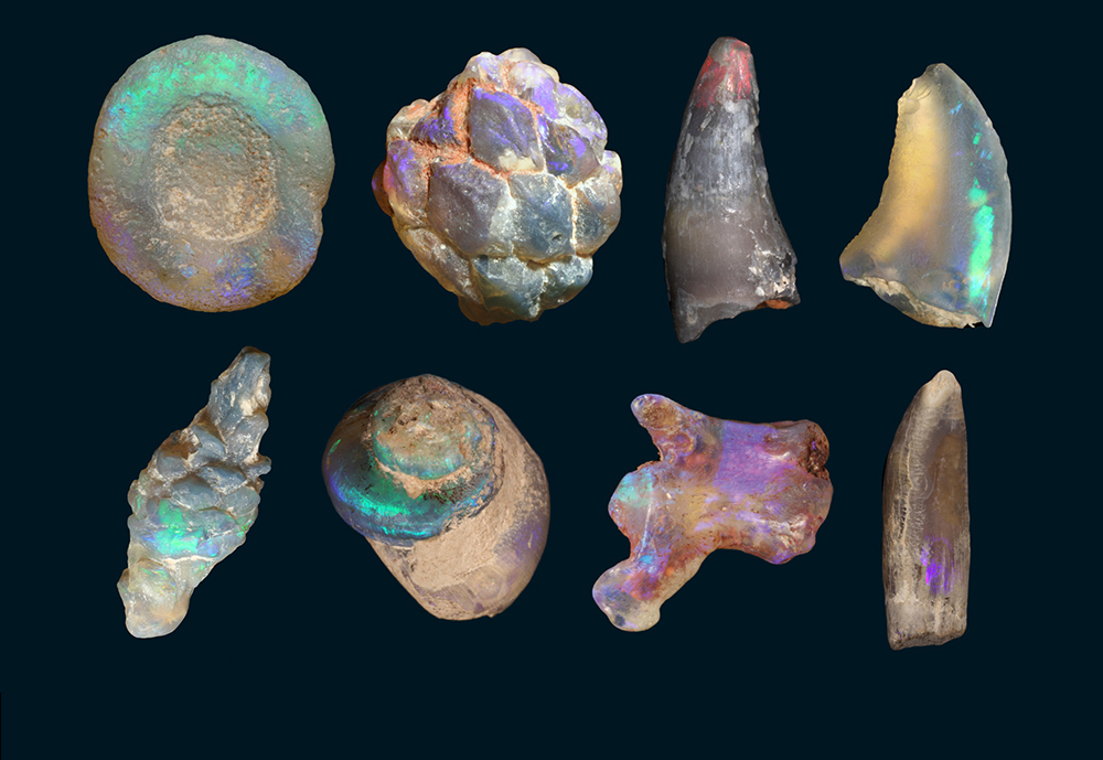 Opalised fossils