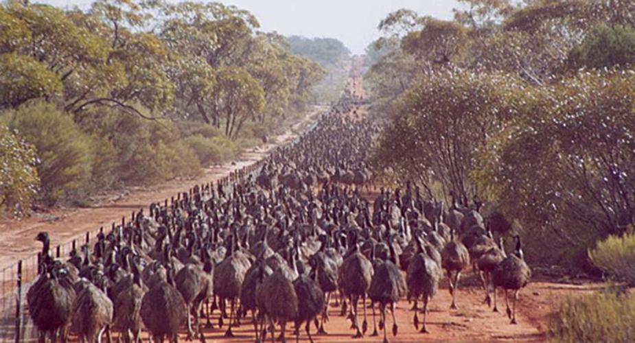 Emu Wars