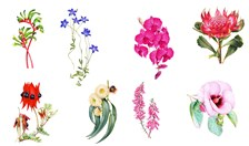 floral illustrations