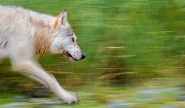 How to take great panning photos