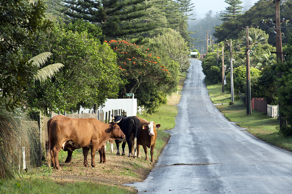 Australian Geographic Travels To Norfolk Island