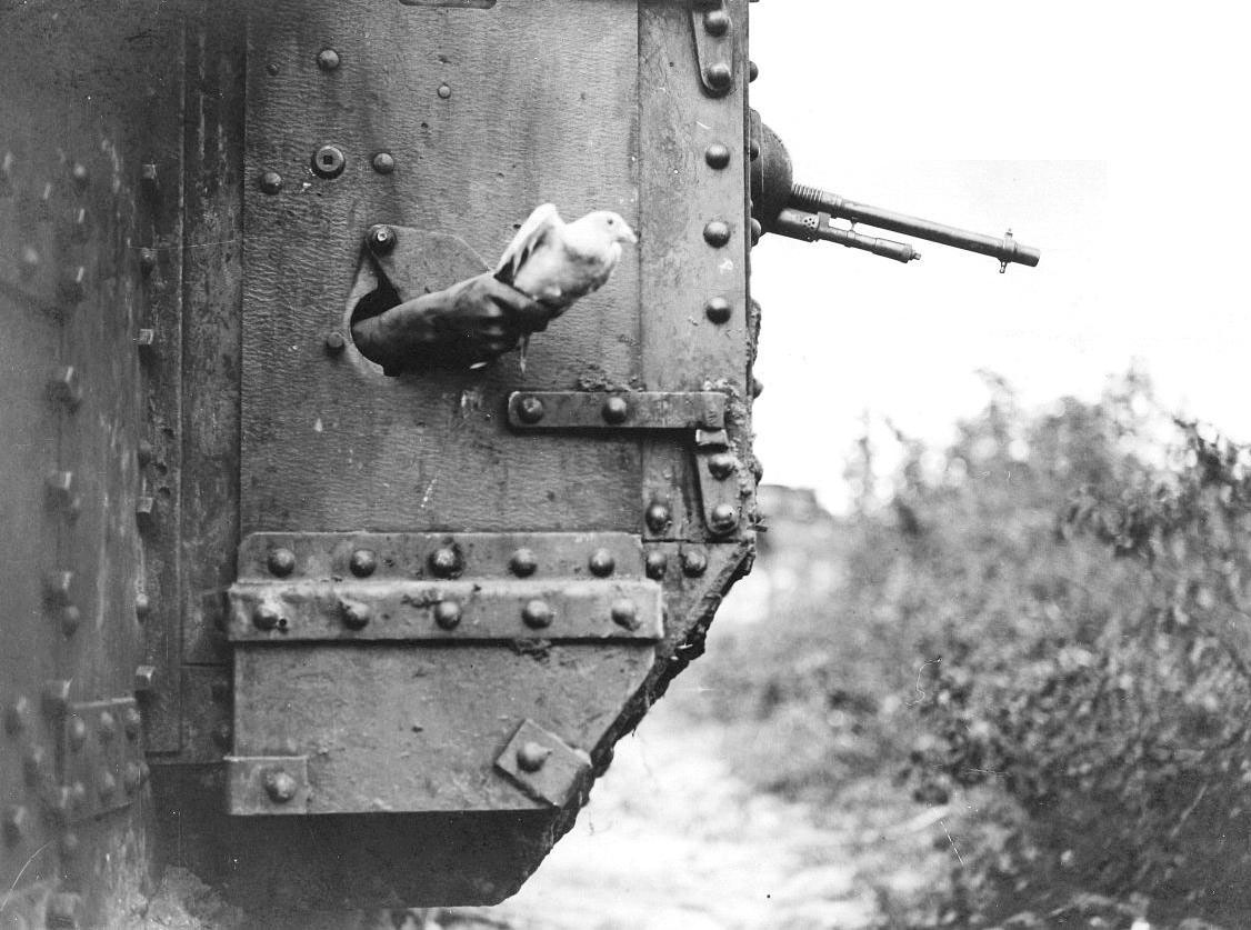 world war one carrier pigeon