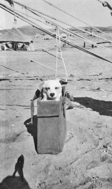 horrie war dog