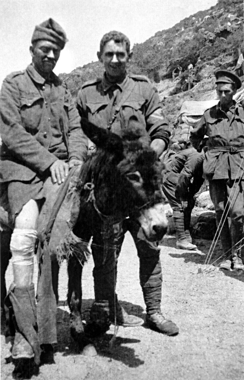 simpson donkey animal heroes