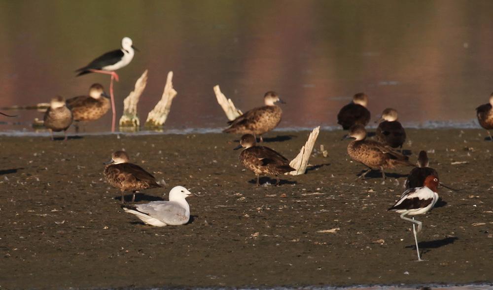 waterbird sewage