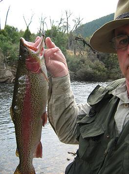 rainbow trout tasmania