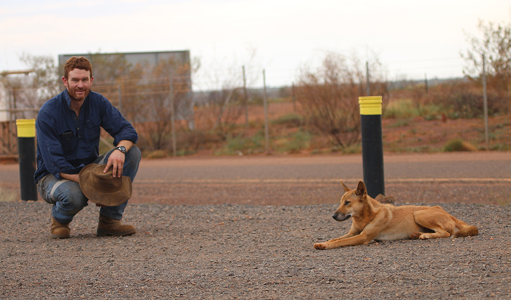 dingo research