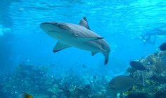 shark reef conservation