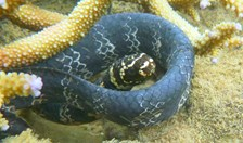 sea snakes colour pollution