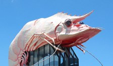 the big prawn
