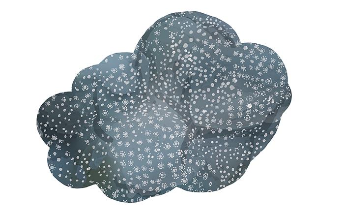 hump coral