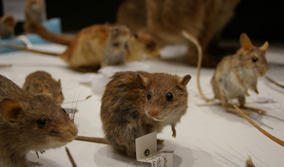 museum taxidermy