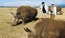 last three white rhinos