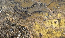 stromatolites discovered in Tasmania