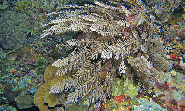 stinging hydroids