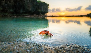 annual Christmas Island red crab migration