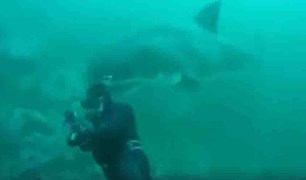 huge shark encounter