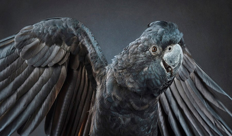 Ken Drake's animal portraiture