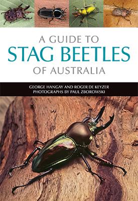 Australian stag beetles