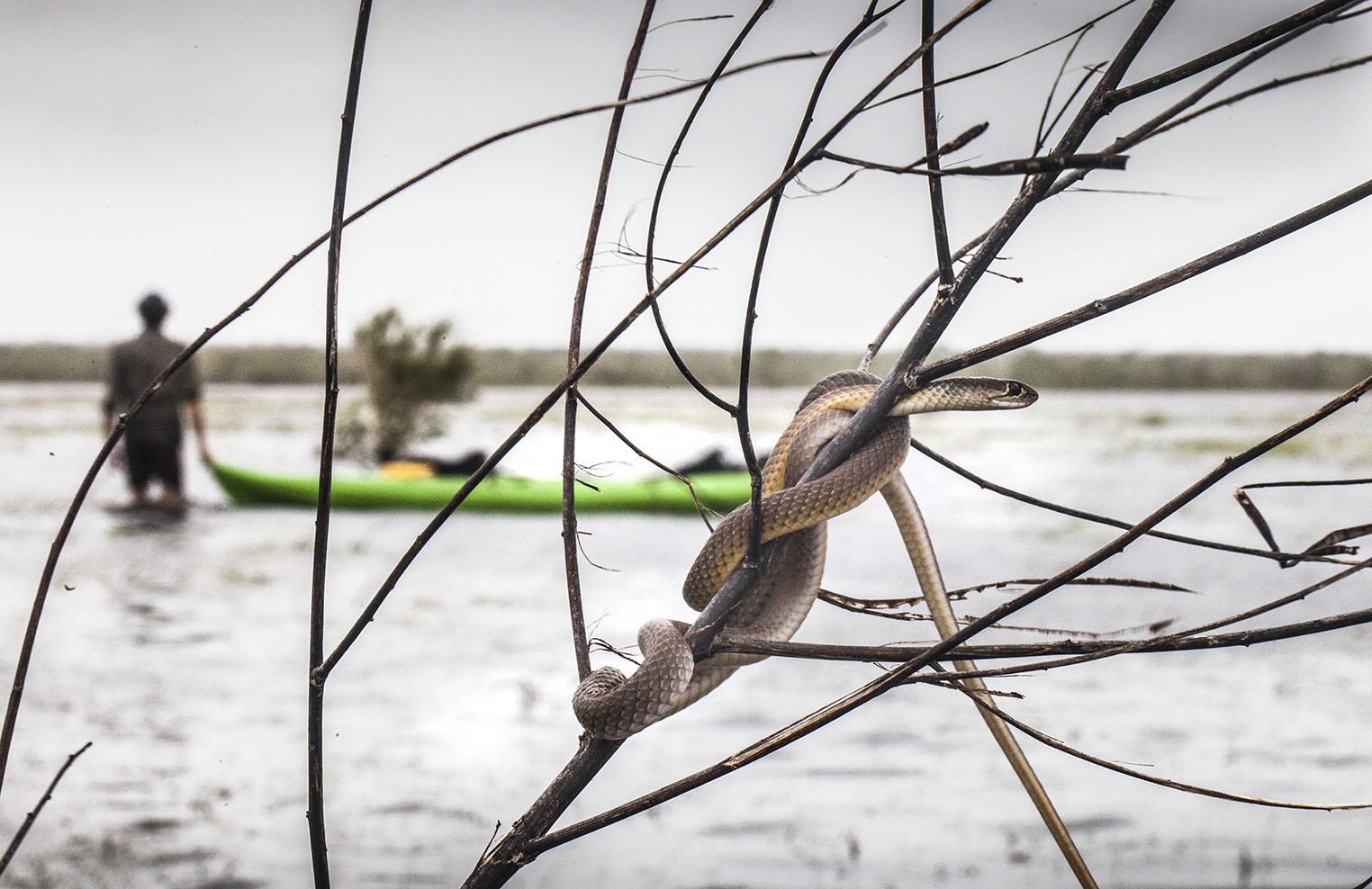 snake floods