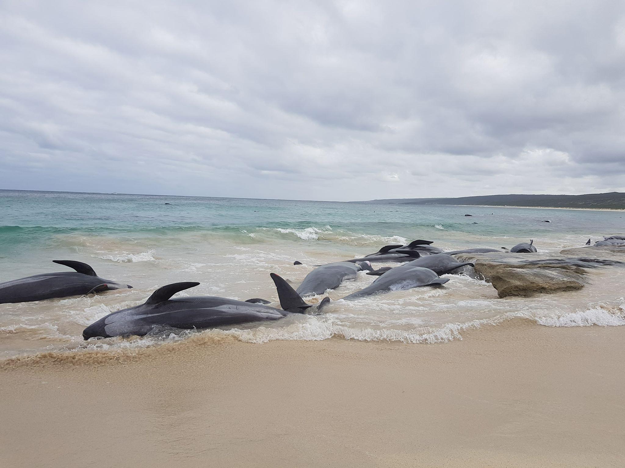 whale stranding WA