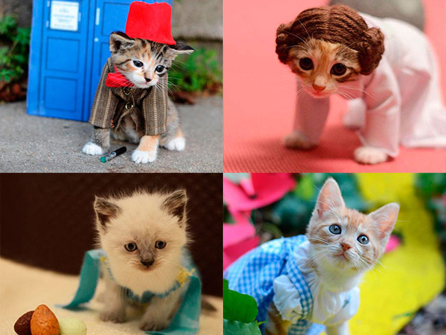 Kittens! In tiny costumes!