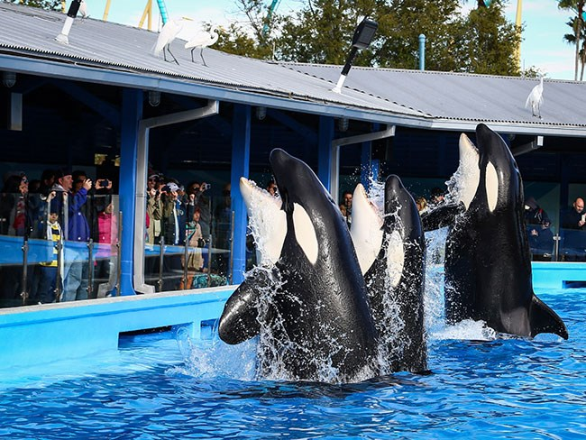 SeaWorld's latest blow