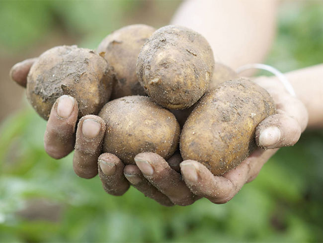 Woman plants potato in her own vagina