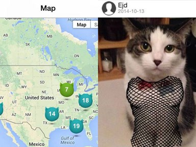 There is now Tinder for cats! This is not a drill!