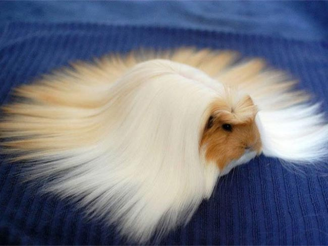 15 animals who have better hair than you