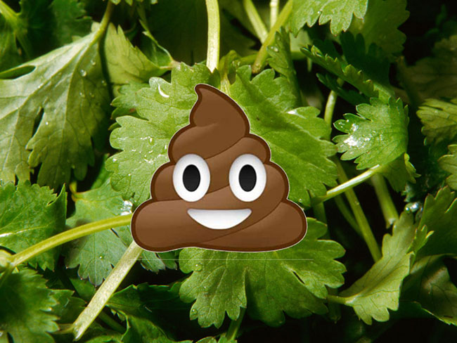 17 legit reasons coriander ruins everything