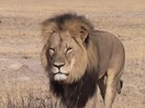 A famous lion has been murdered and celebs are disgusted