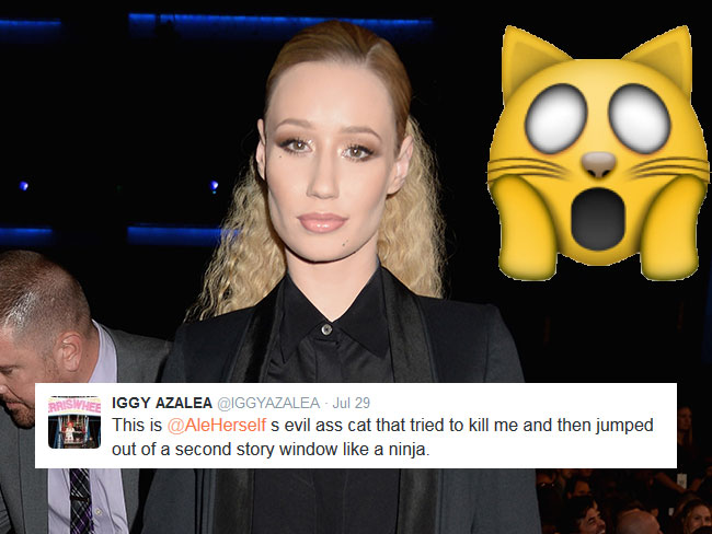 Iggy Azalea attacked by a killer kitten