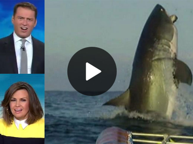 Lisa Wilkinson and Karl Stefanovic's reactions to a Great White are PRICELESS