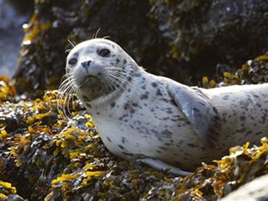 Seal pup dies after woman takes it home from the beach in a tote bag