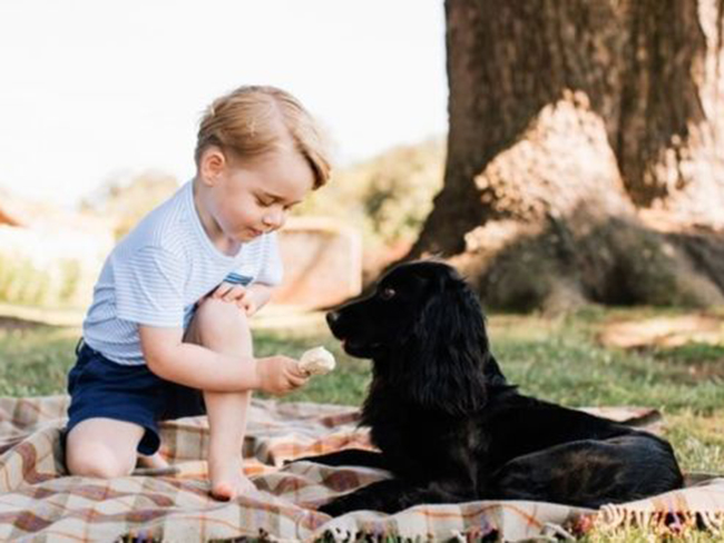 This photo of Prince George feeding his puppy an icecream has caused controversy