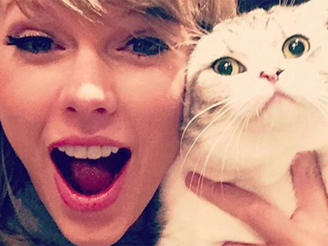 Taylor Swift's cat is glaring at people from the window of her NYC apartment
